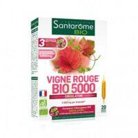 Santarome Bio Vigne rouge Solution buvable 20 Ampoules/10ml à Espaly-Saint-Marcel